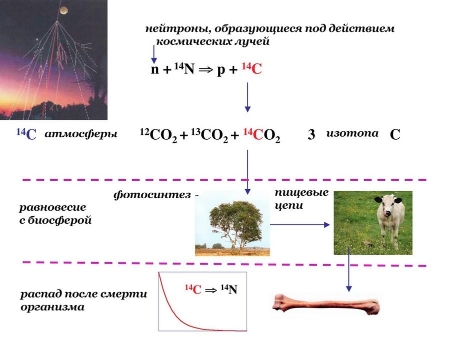 Схема образования радиоуглерода